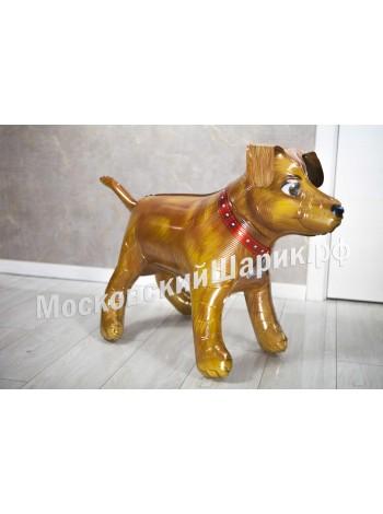 Ходячая собака с гелием